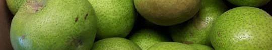 Ouderen en voeding bij Dagactief: wat kunnen we leren van de reacties van mantelzorgers?